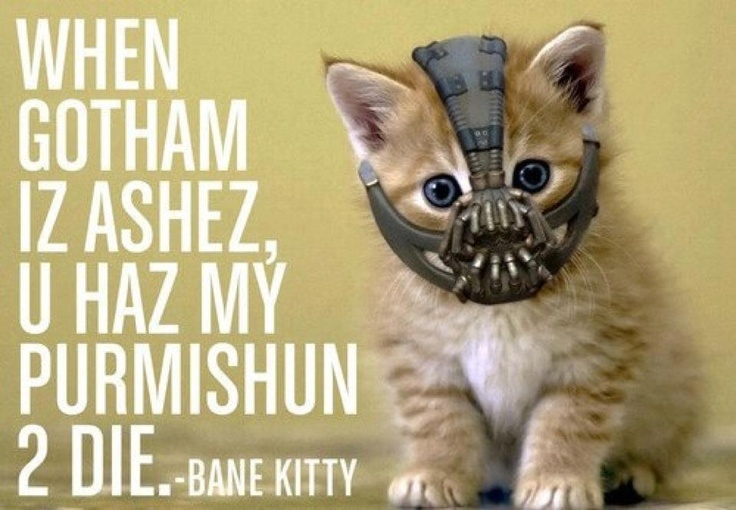 Bane kitty (The Dark Knight Rises) As long as this is not