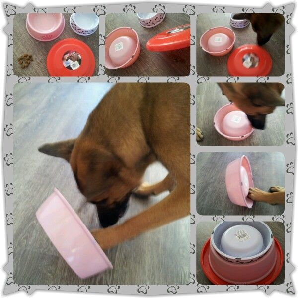 1000 Images About Diy Dog Enrichment On Pinterest Toys