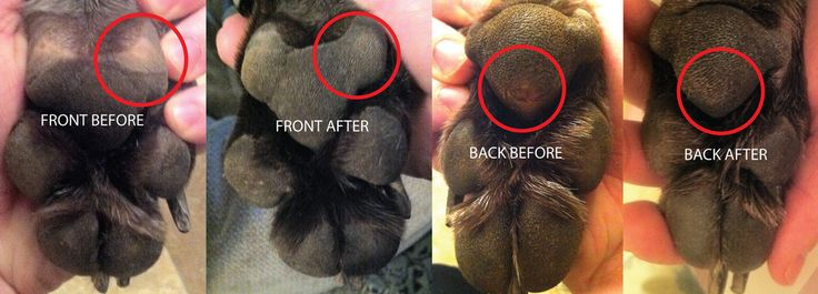 Before and After results after one week of using Loyal Canine Co. First Aid Ointment and Pawmade
