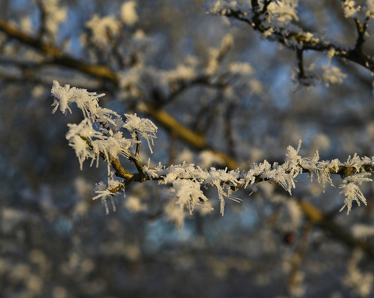 frosty life