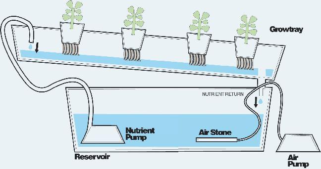 nft hydroponics - nutrient film technique