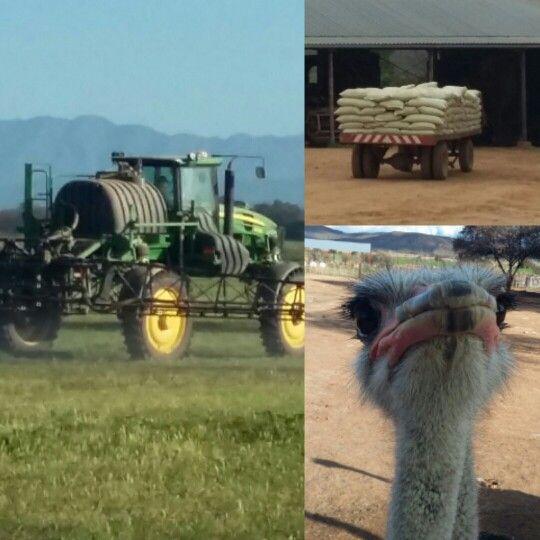 Cutting #lusern to make pellets for our #ostriches #safariostrichfarm.