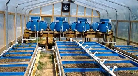 The Off-Grid Homestead Aquaponics System... 40 growbeds set up in four banks of 10 each with each bank tied to a separate fish tank. They use the ebb and flow system with the holding tanks seen elevated above the fish tanks at the end of this photo. The entire system runs on solar power within an enclosed green house ... #Aquaponics #Hydroponics #Gardening #Design