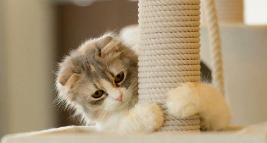 Gimnasio casero para gatos economico