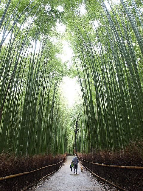 Bamboo lined walkway in Kyoto