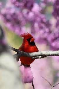 Cardinal at the Morton Arboretum; Lisle, IL.