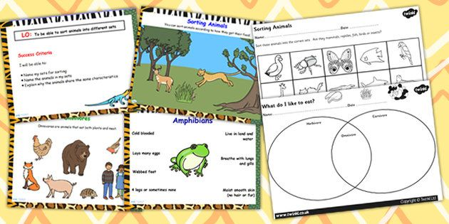 ... Living Things and their Habitats Herbivore or Carnivore Lesson Teaching Pack Flipchart ...