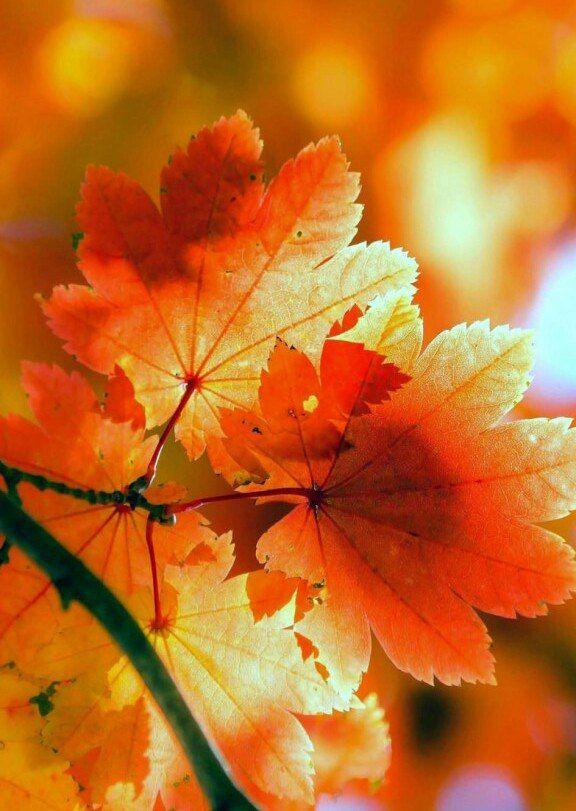 """""""Осень время поэтов и задумчивых женщин, время, когда кренится чаша весов и необузданная ярость жизни идет на убыль. Осенью оседает пыл..."""