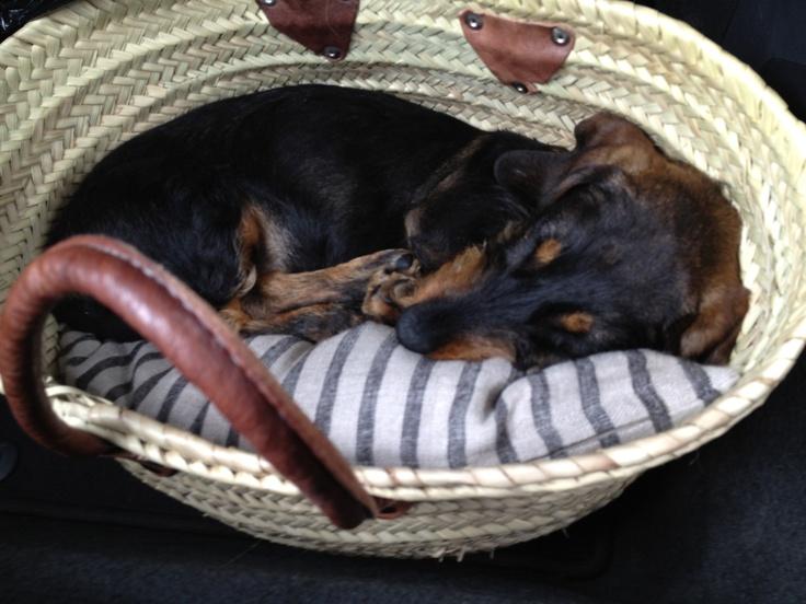 Een hondenmandje gemaakt van een Spaans/Franse boodschappentas! Superhandig en niet duur!!