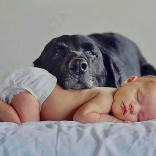Best Dogs Kids Images On Pinterest Kids Dogs And Babies - 30 adorable pictures babies puppies will melt heart