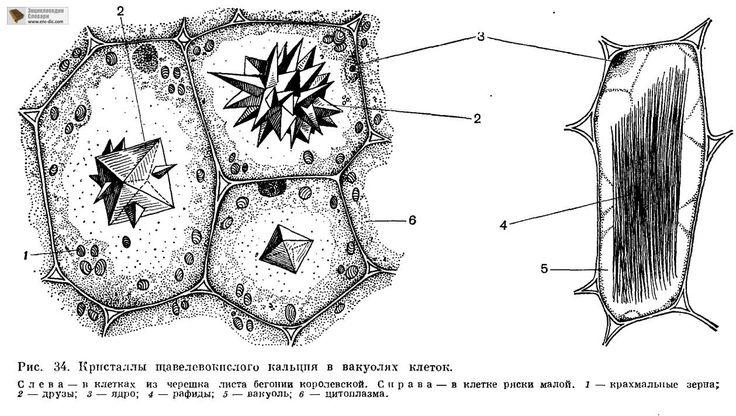 Картинки по запросу необработанный алмаз