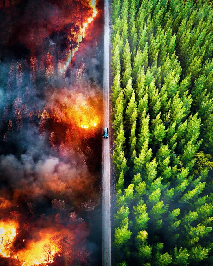 Fire And Deforestation Amazon Rainforest 2019 By Demas Rusli