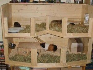 site caviahok | Cavia - Pet guinea pigs, Guinea pig hutch ...