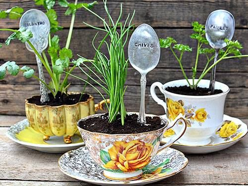 I would love to unpack all my old coffee mugs and use them to plant herbs and small veggies on my kitchen window sill!