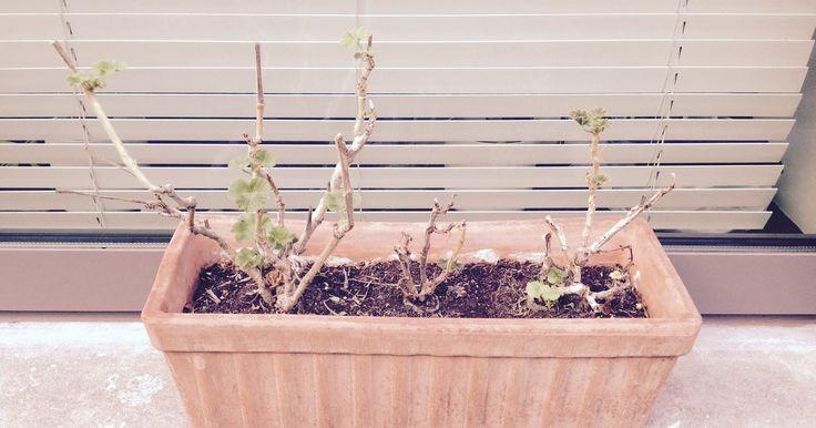 Jouw planten zijn fan van een verse lading potgrond. Maar waar kieper je de oude dan?