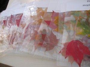 Participating in a preschool leaf exchange | Teach Preschool