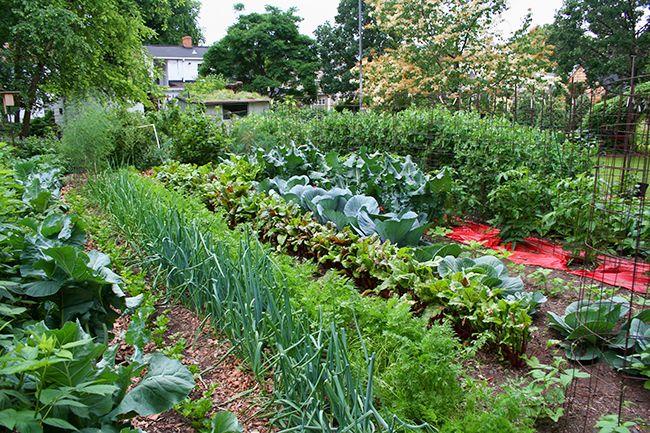 Как развести дрожжи для подкормки растений | Красивый Дом и Сад