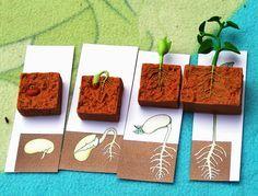 La germination du haricot ~ La petite vie d'Ilhan et Mélia (ou la vie sans école)