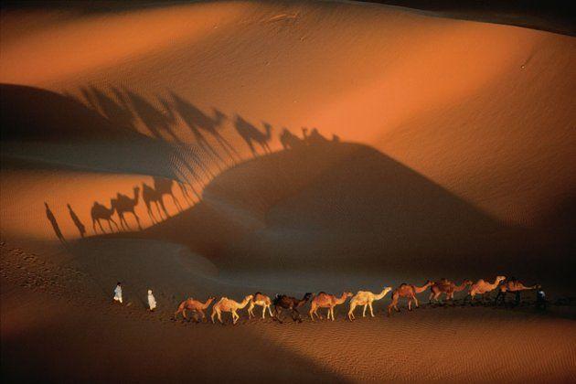 Caravana de camellos, cerca de Nuakchot, Mauritania.