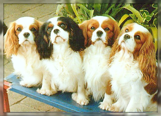 Group Pic <3 - I am falling in love with these dogs Alia!!  Just like Ray, how can you NOT love these faces!