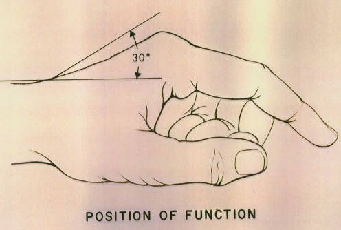 Illustration showing potential angle of extension at the wrist :: Orthopaedic Surgical Anatomy Teaching Collection