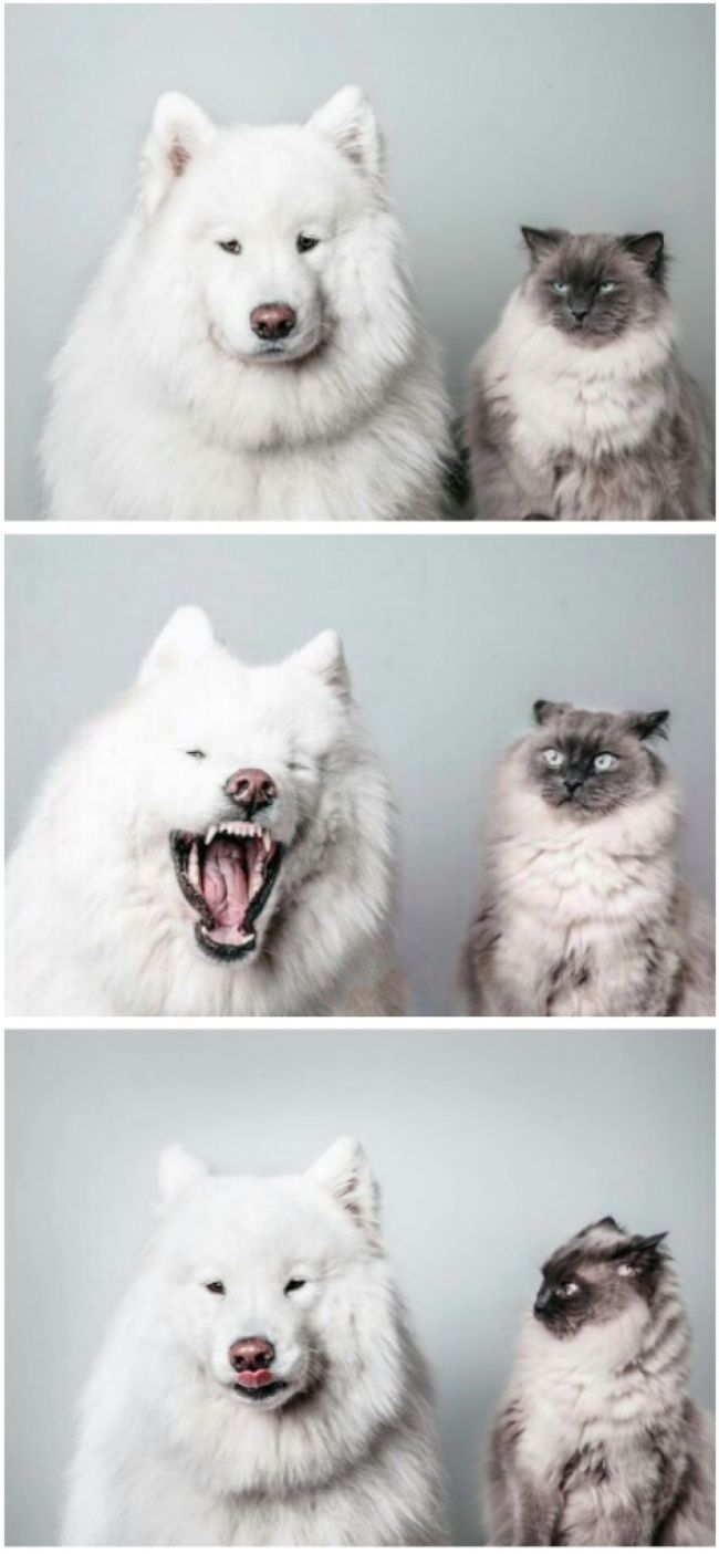 "Picture time! Say ""cheese and bisquits!"". Cat: meh... Dog: WOOOOOOOF Cat: wth?!! you damn fluffball..."