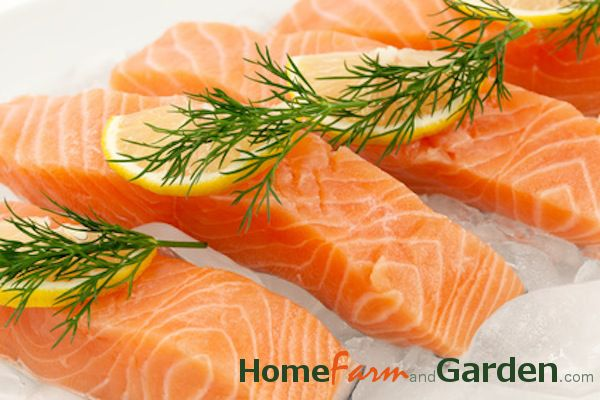 Steamed salmon recipe with lemon and dill (freeze in foodsaver steamer bags and microwave for ? minutes)