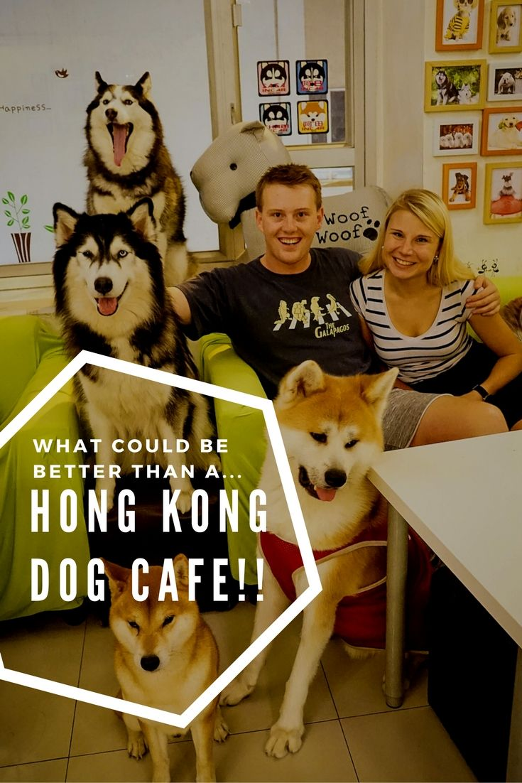 A quirky visit to a Hong Kong Dog Cafe - OnDogDog Cafe is a quirky place full of fluffy canines just waiting to be pat and cuddled. A must do tourist site! Looking for things to do in Hong Kong? Or places to eat in Hong Kong? or even, are you bored in Hong Kong! This cute animal cafe is just what you need!  Click through to read more and a guide to visiting  ☆☆Brought to You via #Inspiredbymaps ☆☆