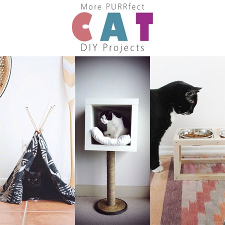It's time for More Purrfect Cat DIY Projects and WOW are you going to love them along with your kitty cats! They are quick...easy and fabulous!