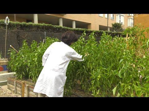 El huerto terapéutico del Centro de Salud Carabanchel Alto - YouTube