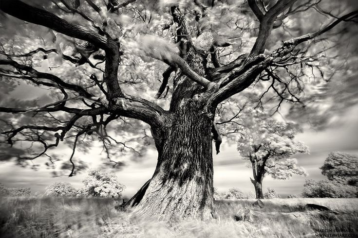 Portrait of Tree... by xMEGALOPOLISx