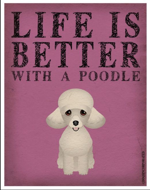 ...and life is better when you attend the Poodle Peace Parade.  #poodle #quote