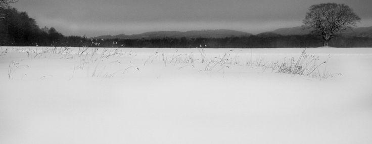 Vintervitt i Steninge