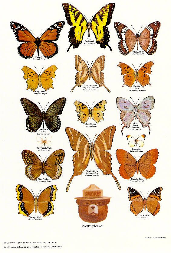Smokey the Bear's Butterfly Poster