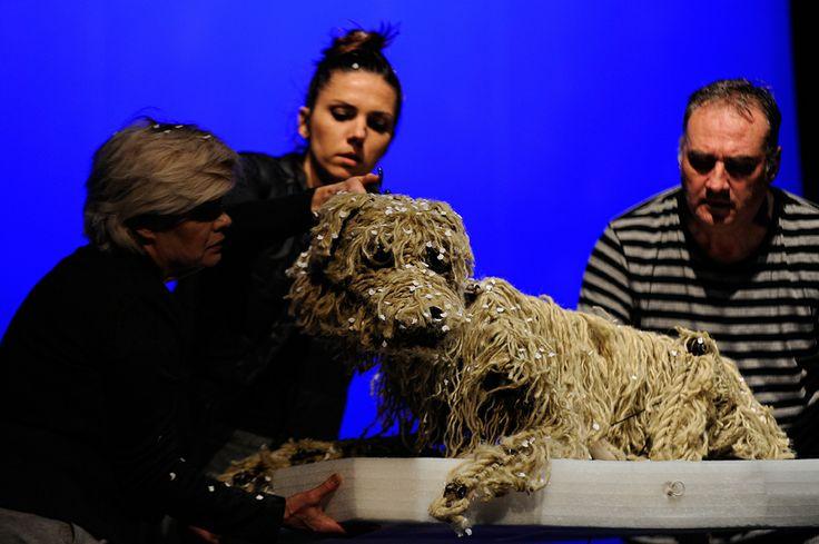 Baltic. The Dog on the ice floe. A performance at the Miniatura City Theatre in Gdansk. Photo by Piotr Pędziszewski