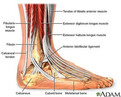 44 best MUSCLES AND ANATOMY images on Pinterest