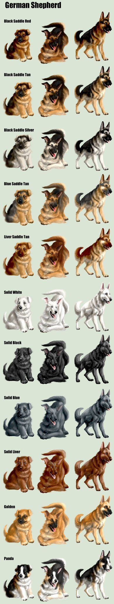 Distintas coloraciones del Pastor Alemán  #perros #pastoraleman #doglovers Everything you want to know about GSDs. Health and beauty recommendations. Funny videos and more
