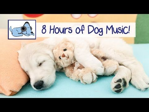 8 HOURS OF RELAX MY DOG MUSIC!! Longest Video Yet! Relaxing pet music, separation anxiety. - YouTube
