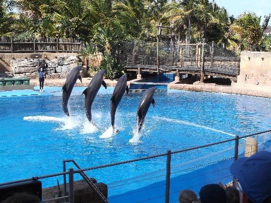 Dolphin Stadium, UShaka Marine World