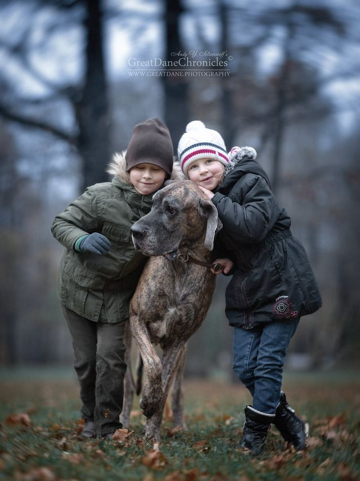 Best Great Dane Images On Pinterest Beautiful Dog And Dogs - Tiny children and their huge dogs photographed in adorable portraits by andy seliverstoff