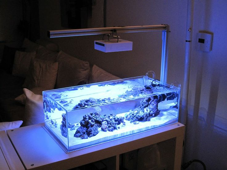 100 ideas to try about reef aquariums and related for Aquarium recifal nano