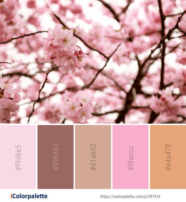 Color Palette Ideas From 1803 Blossom Images Icolorpalette Japanese Colors Pink Images Pastel Color Schemes