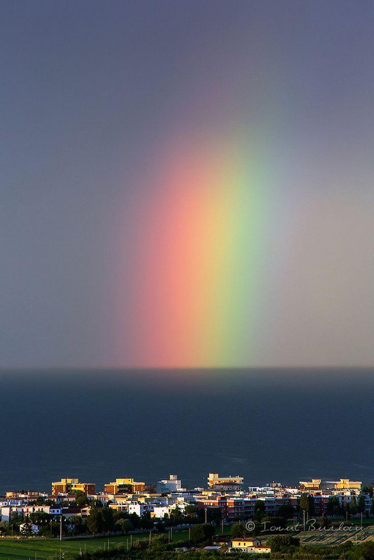 155 best rainbows images on pinterest rainbows beautiful horses