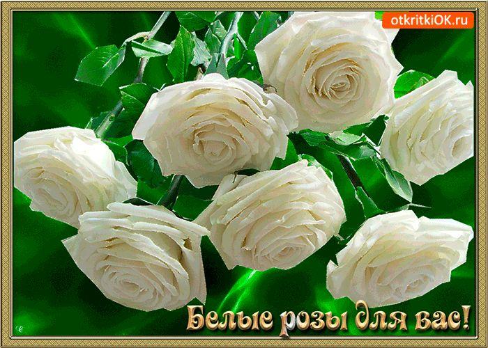 Прикольные картинки, розы для оли картинки