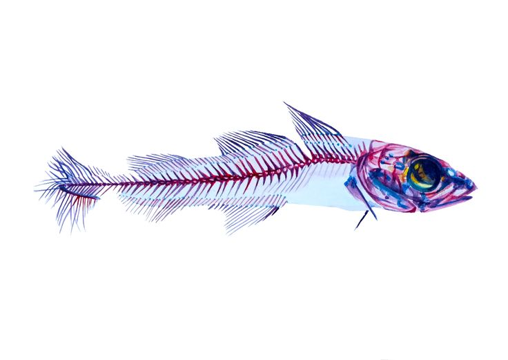 Fishy, watercolour on paper, Nikolina Ivanovic, 2016