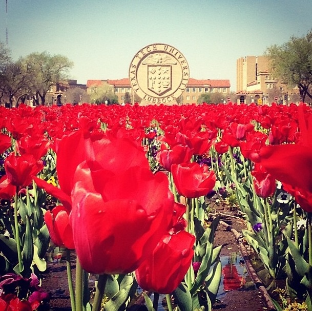 Because even though there's no football in the spring, Tech always breaks out the tulips to make up for it. :)