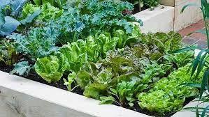 Výsledek obrázku pro pěkná zeleninová zahrada