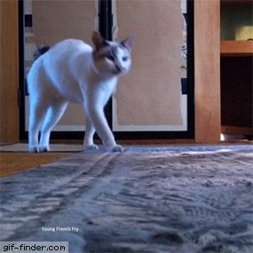 Suddenly weird Cat scratches his butt on the carpet! | Gif Finder – Find and Share funny animated gifs