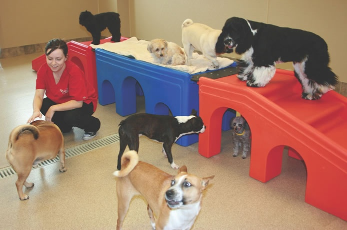 114 best dog daycare ideas images on pinterest dog for Best dog boarding dc