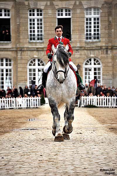 Percheron | Parade of stallions at the Haras National du Pin, back - Percheron Horse Society of France